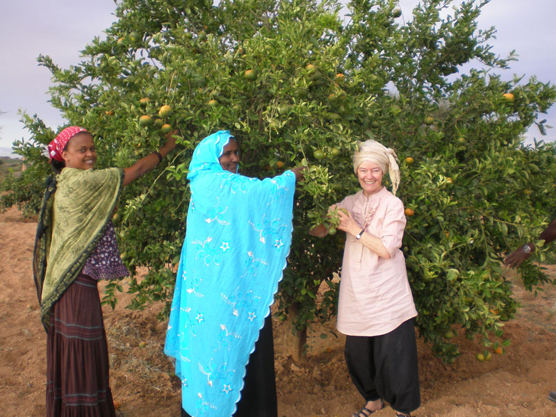volunteer edna adan hospital so land hospital volunteers pick tangerines
