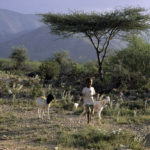 Somaliland child with Goats
