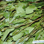 Khat leaves = big problems