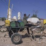 Hargeisa donkey