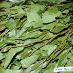 Khat leaves = big problems