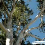 Good looking tree